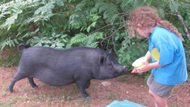 Picture of a guest feeding a pig at Spirit Point